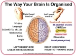Left-handed-facts-Brain1